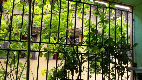 Balcony Gareden India