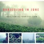 Darjeeling in June:Why nature lovers must visit