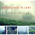 DARJEELING IN JUNE