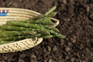 Asparagus: Gardening Tips, Springtime Recipes, and Health Benefits