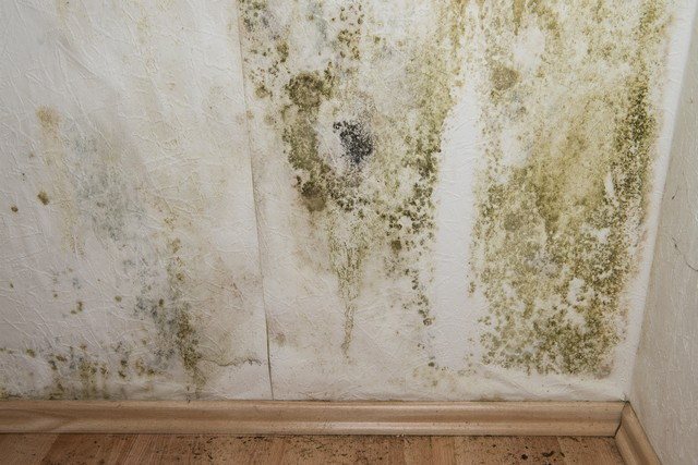 10 Mold Prevention Tips Every Home Owner Should Know!