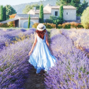 Lavender Obsession