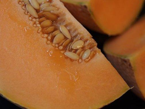 melon-1565567__340