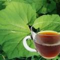 Butterbur Tea