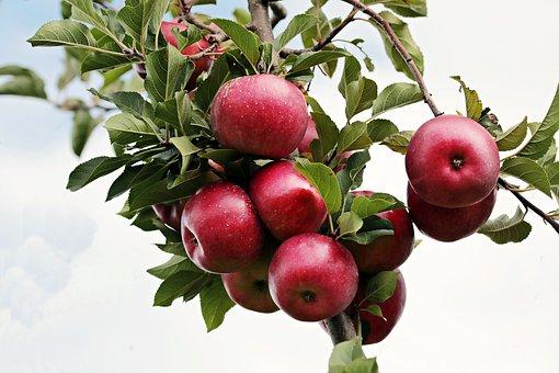 apple-2788599__340