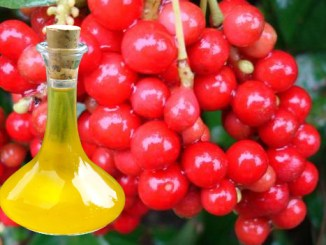 Schizandra Berries Oil