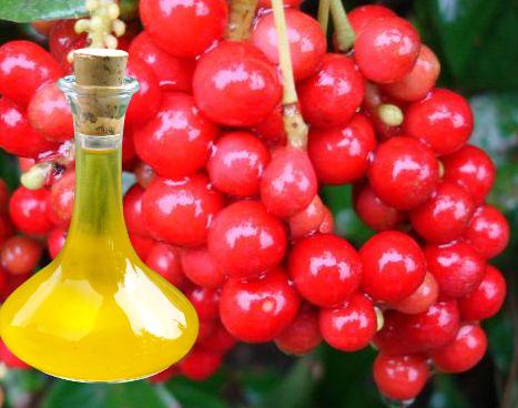 Schizandra Berries Oil
