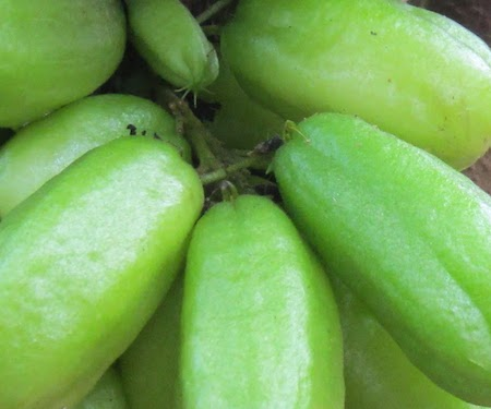 Bilimbi Fruit