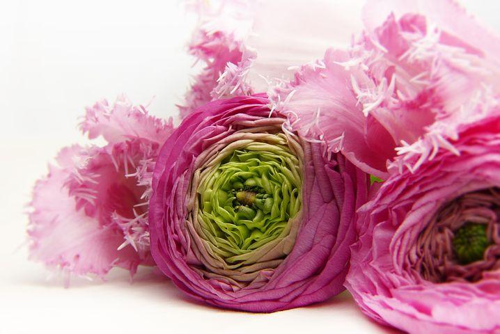 blossom-3176402__480