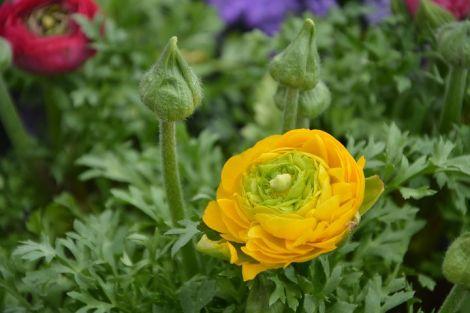 flower-3244779__480