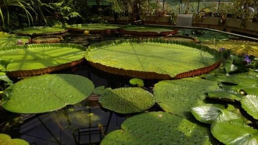 jardin-des-plantes-861521__340