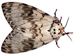 GMO poison to be carpet bombed across 10,000 acres of Western Washington to kill moths