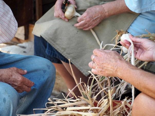 marksearch garlic