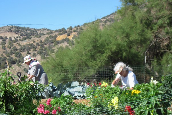 gardening in silver city