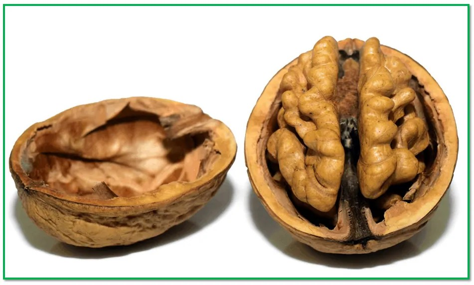 walnut super food for learning
