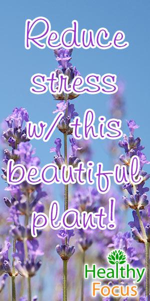 mig-reduce-stress-w-this-beautiful-plant