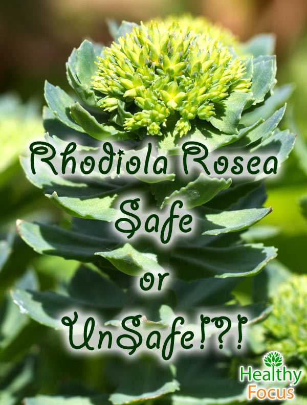 Proven Rhodiola Rosea Benefits and Side Effects Healthy Focus