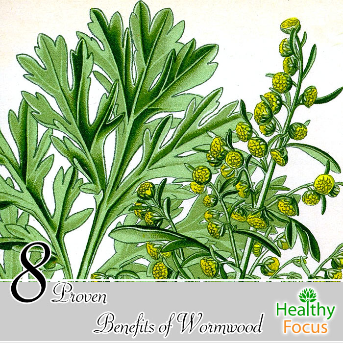 hdr-8-Proven-Benefits-of-Wormwood