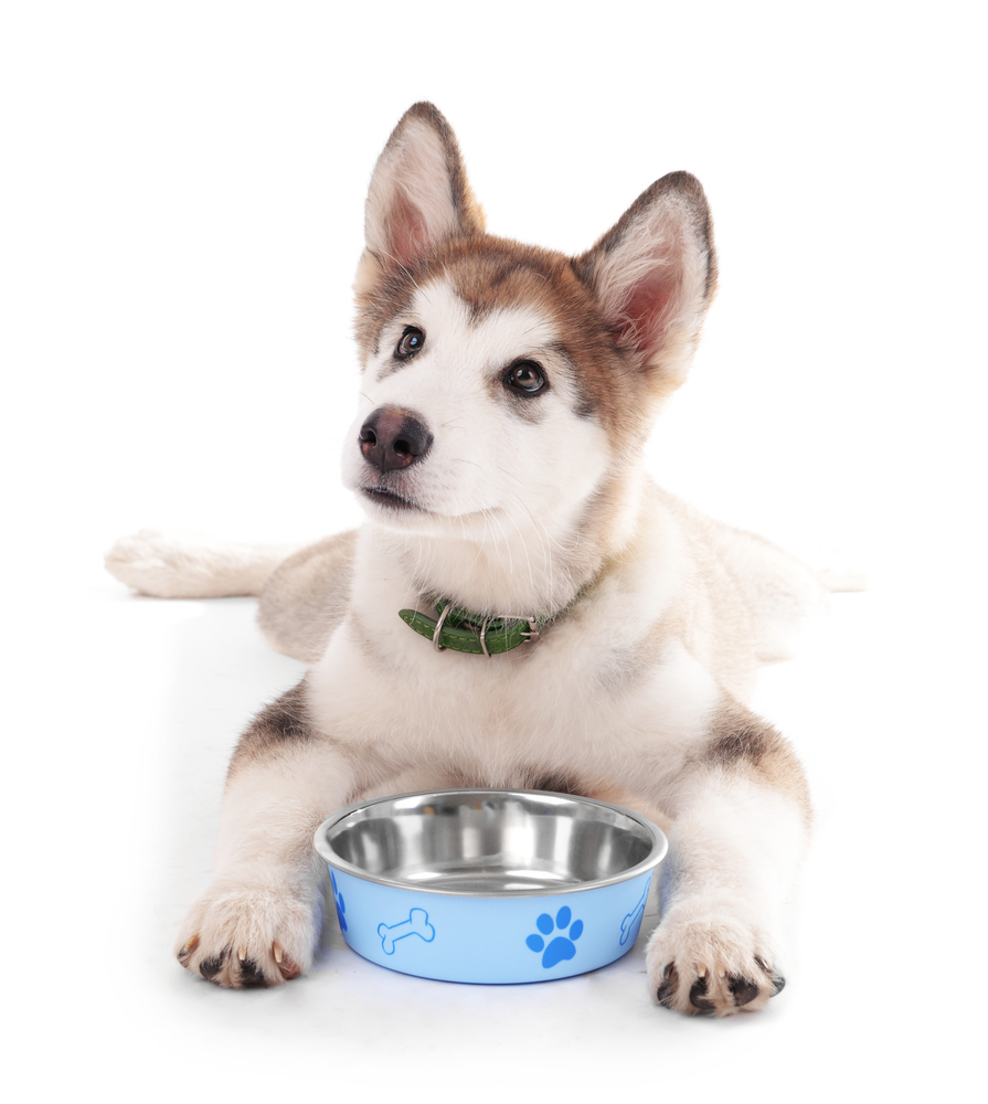 Top Best Veterinary Recommended Dog Food