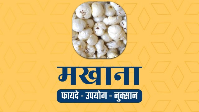 makhana fox nut in hindi
