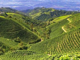 Coffee plantation 700x330