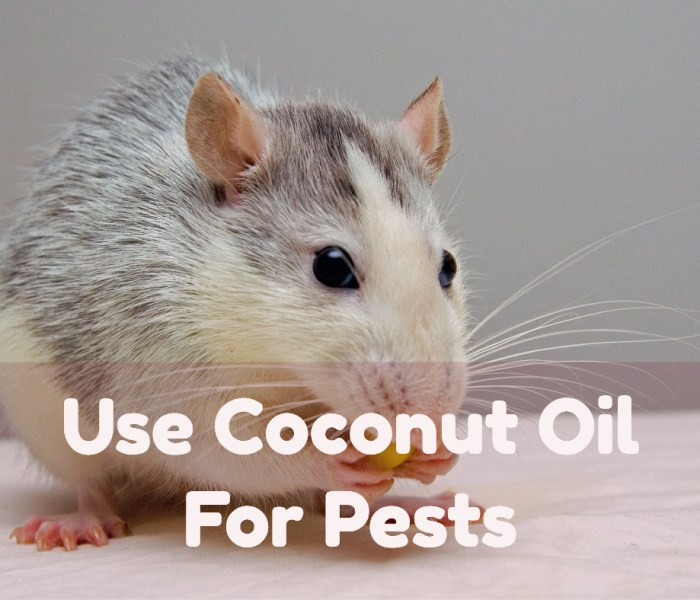 Natural Pest Control Tips: Use Coconut Oil For Pests
