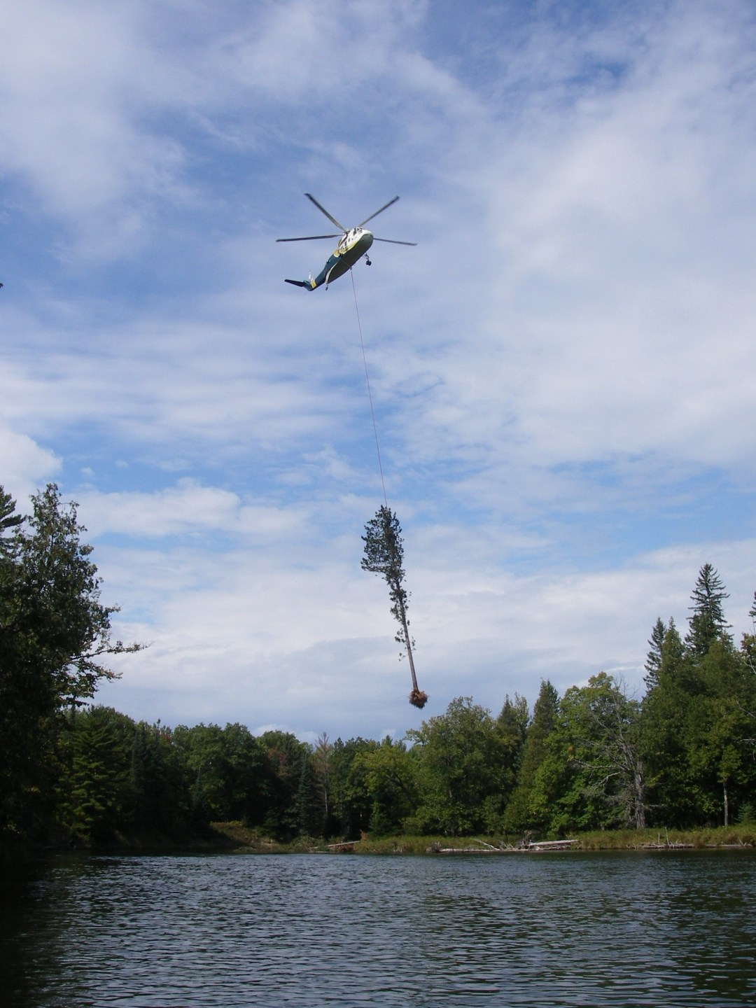 A helicopter places a large tree in the Au Sable River