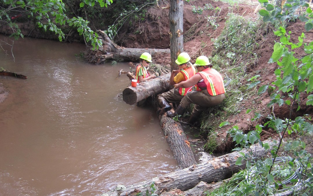 Workers place large tree stumps and other woody debris in Whittlesey Creek.