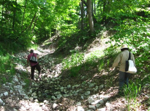 People plant native plants in an Illinois ravine ecosystem.