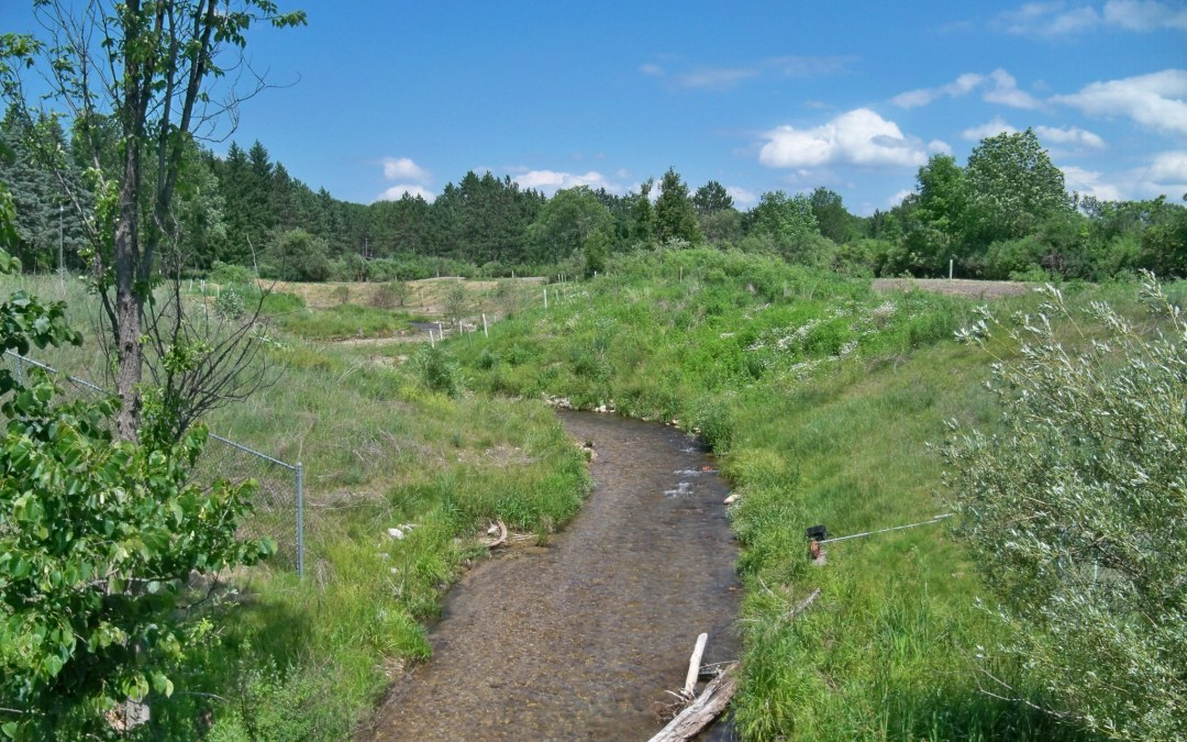 A creek with vegetated streambanks