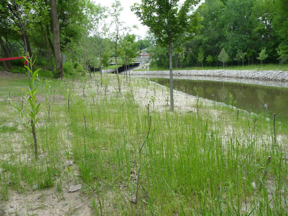 New grass growing following the removal of the Wayne Road Dam