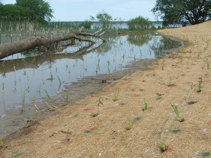 Shoreline areas with new plants to anchor soil
