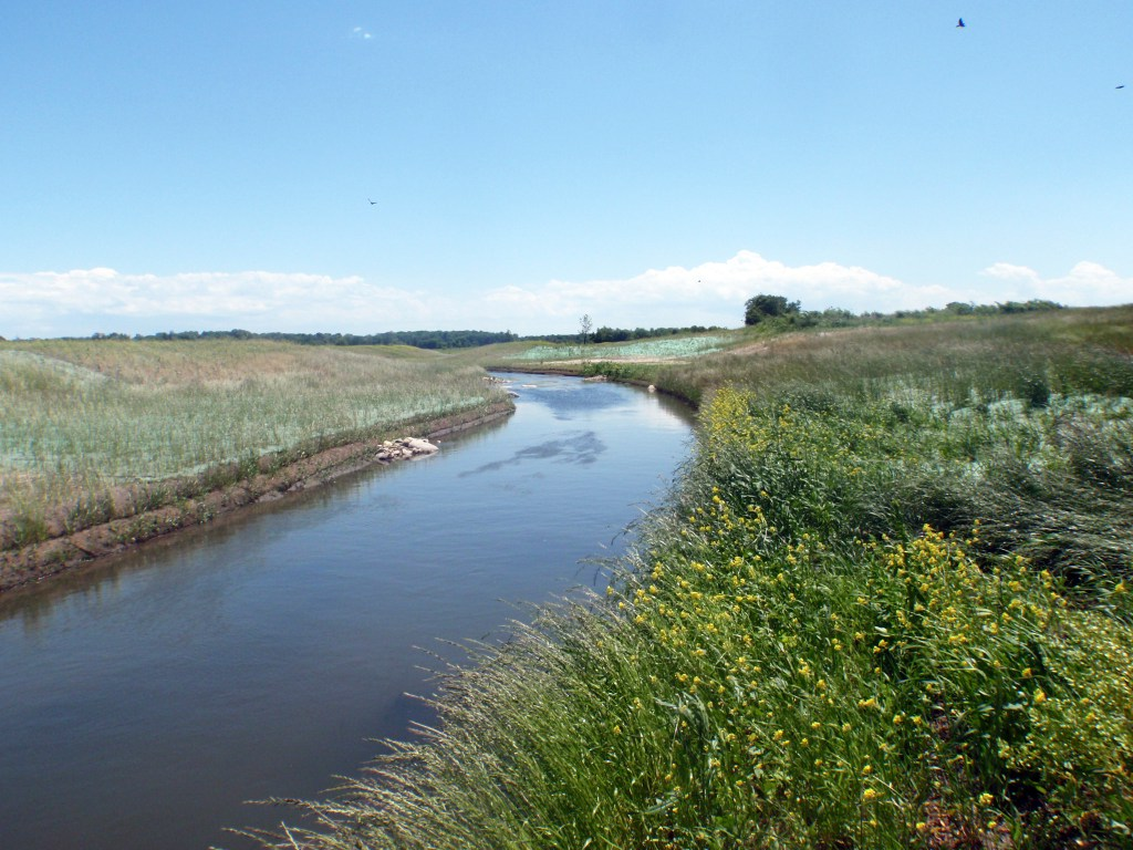 river flowing through grasslands