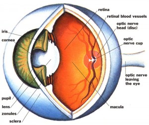 Simple but useful tips for your eyes