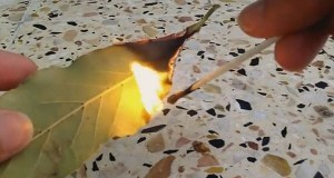 Just Burn A Bay Leaf In Your House. The Reason? You'll Want To Try THIS Trick Right After Reading This