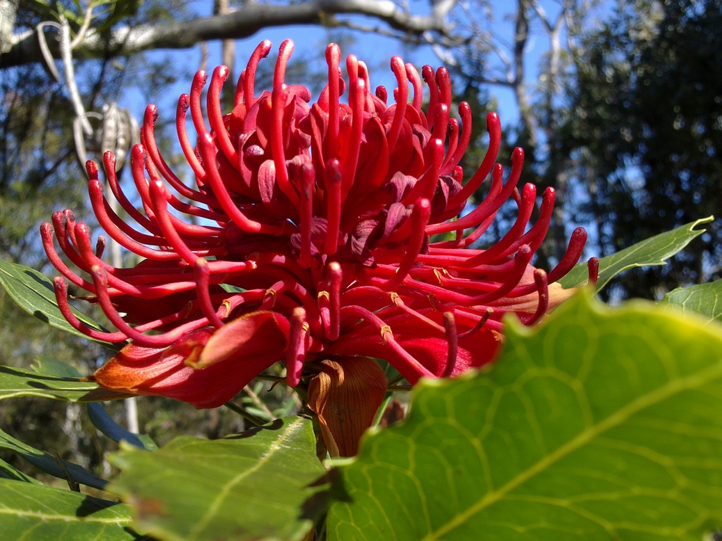 Managing Emotional Ups And Downs With Australian Bush Flower