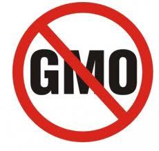 GMO genetically modified organisms