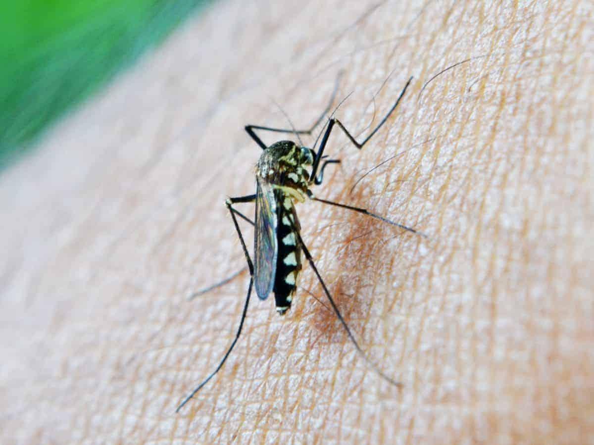 Best Natural Mosquito Repellent Recipe