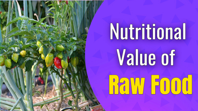 Nutritional Value of Raw Food Diets – How Good is it?