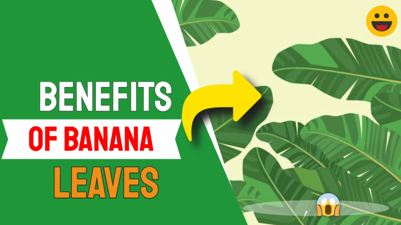 Benefits of Banana Leaves: