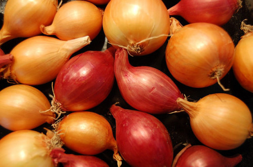 Onions - Ilovebutter