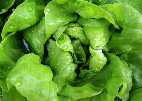 3.Dark Leafy Greens