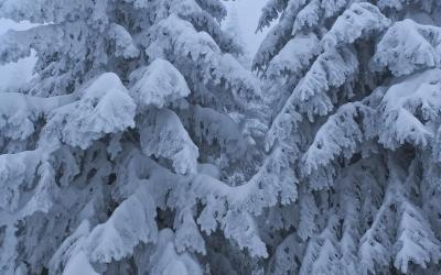 Winter Philosophy by Fred The Flea