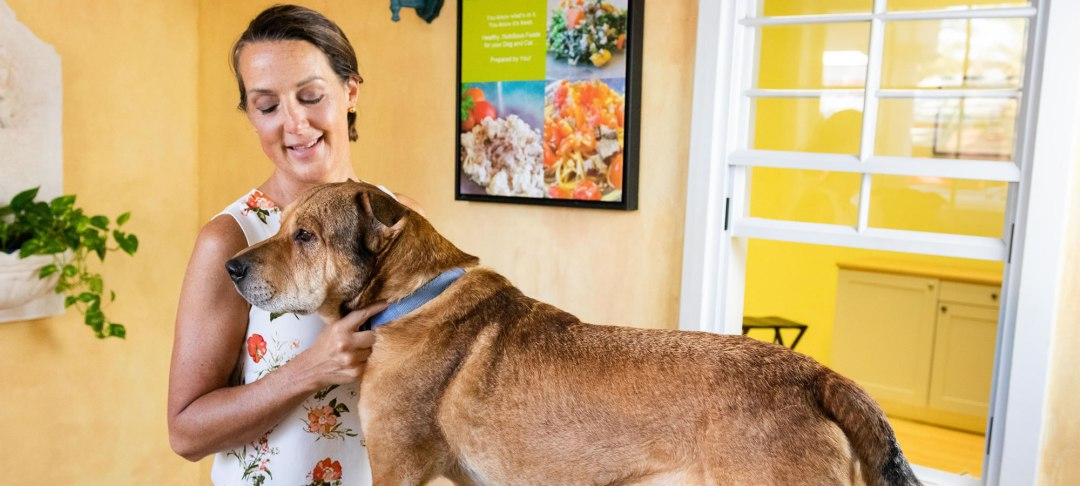 Healthy Pawsibilities | Clearwater Holistic Vet Near Me