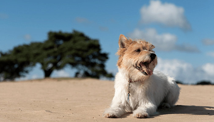 """How """"Ozone"""" Therapy is Used in Veterinary Medicine"""