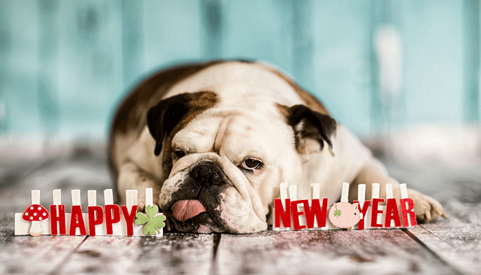 2016 Resolutions for Your Pet Family