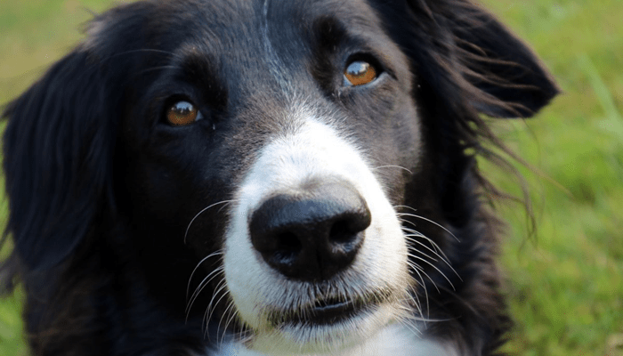 Should I give my dog heart worm preventative all year round?