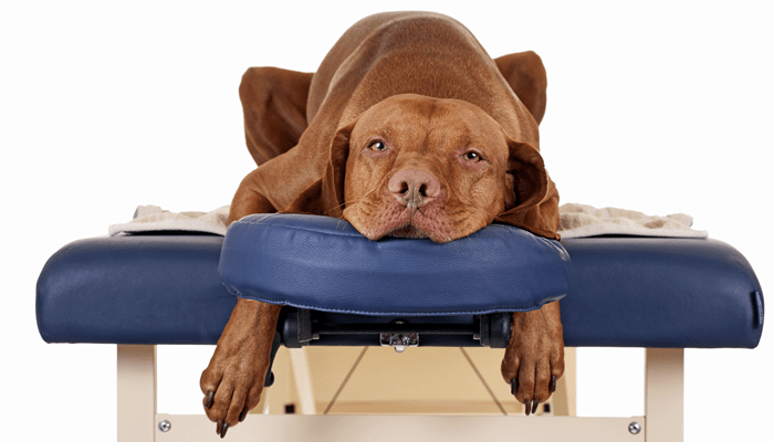 Chiropractic care for my pet?  I've never heard of it! Tell me more.