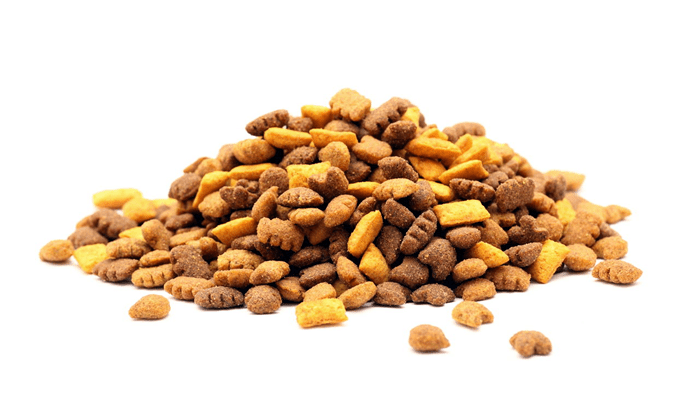 Is dry food good for my cat?