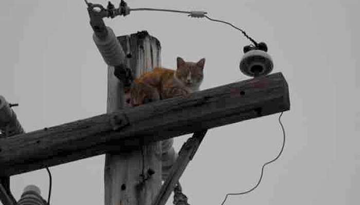 Who Do I Call if my Cat gets Stuck up an Electrical Pole?
